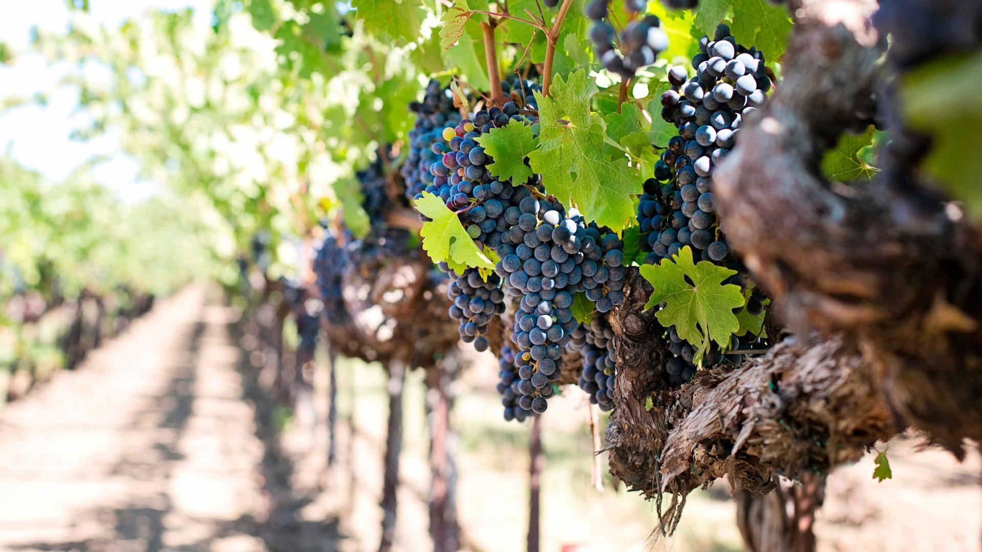 Como a tecnologia apoia as adegas de vinho em Portugal