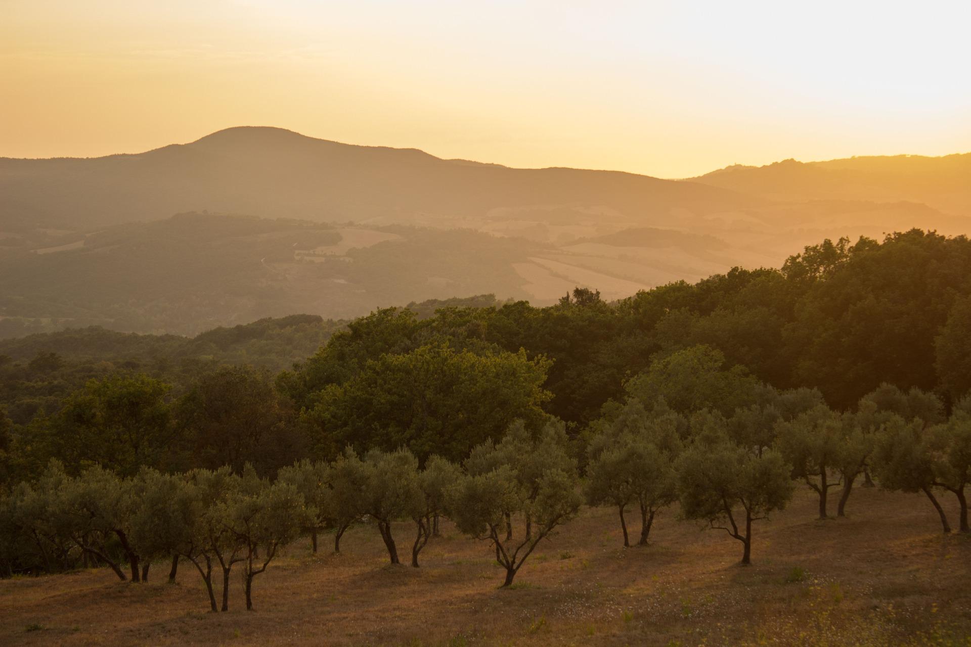 Como a indústria da pesagem apoia os lagares de azeite em Portugal